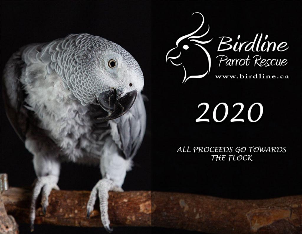 Birdline Canada Parrot Rescue 2020 Calendars