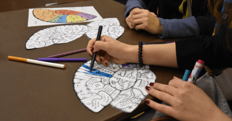 Several figures sit at a table in a meeting, colouring in some diagrams of the human brain. Only their hands are visible.