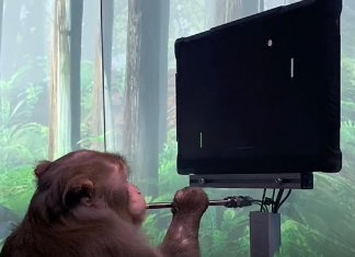 "Watch Video Of Neuralink chip implanted Monkey ""Pager"" Playing Ping Pong With Its Mind - Craffic"