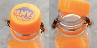 Looks like Even Bees have Learned some New Skills During Lockdown