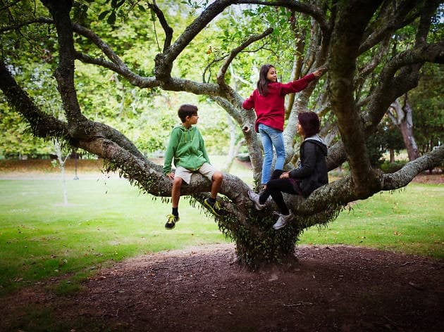 Living Around Trees Might Help in The Brain Development of Kids
