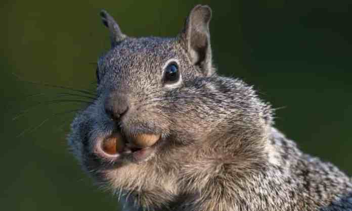 Ground Squirrels have four specific personality traits similar to humans, a new study says