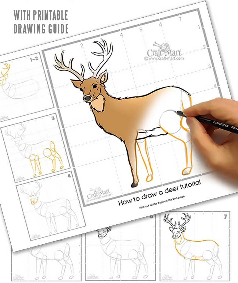 Drawing A Deer In 10 Steps Easy Tutorial Craft Mart