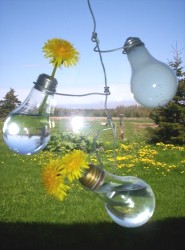 Light Bulb Window Vase
