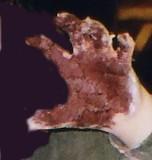 Shaving cream hand