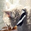 Trendy Pet Collar