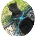 Crochet A Cat Harness Leash