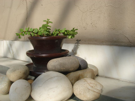 Recycled Planter Outside
