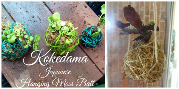 How to Make a Kokedama – Hanging Japanese Moss Balls