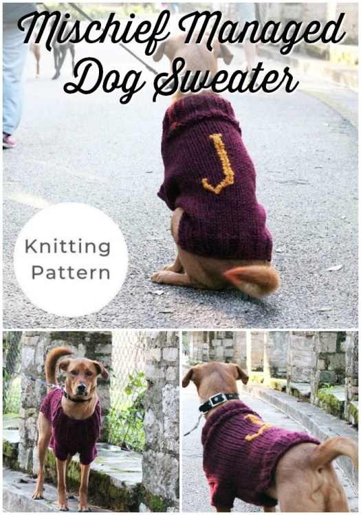 Mischief Managed Dog Sweater - Harry Potter inspired knit dog sweater pattern. Such a fun gift for a special dog in your life. #dogsweaterpattern #knitdogsweater #knittingpattern #craftevangelist