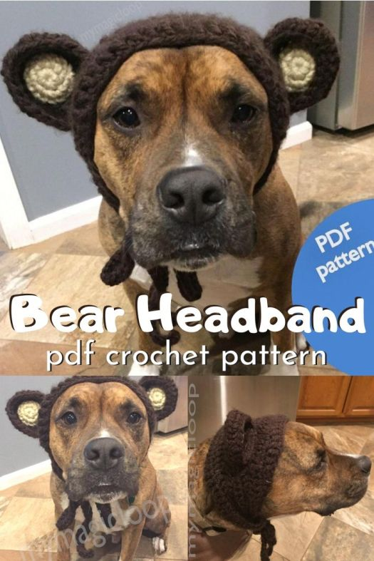 Funny little dog headband to dress your dog up like a bear. Cute little bear ears for your dog crochet pattern. Fun! #crochetpattern #dogheadband #dogcostume #diydogcostume #bearheadband #craftevangelist