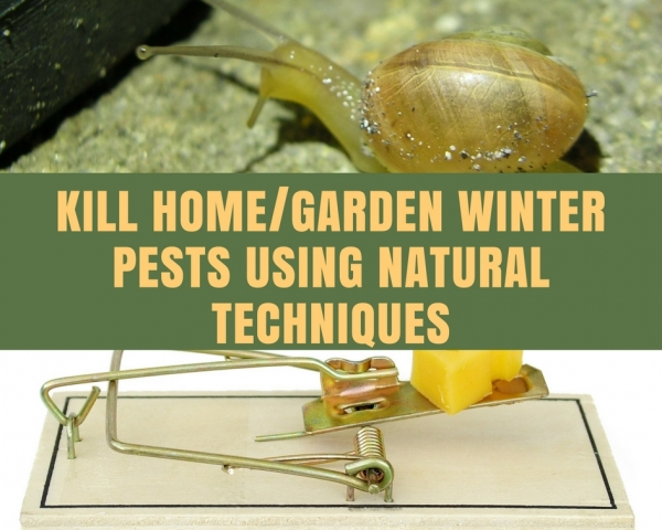 How to kill Home and Garden Pests in Winter Naturally