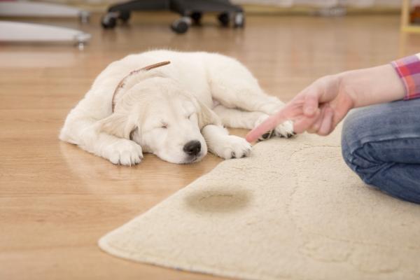 Dog carpet urine