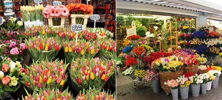 b_5-florerias-mercado-de-flores