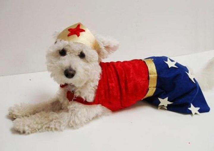 disfraz-mujer-maravilla-para-perro