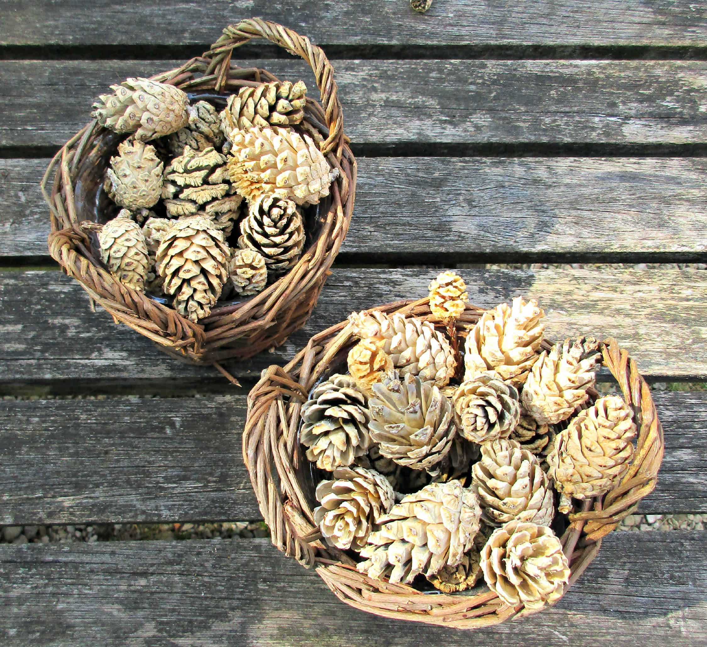 How to Easily Bleach Pine Cones at Home • Craft Invaders