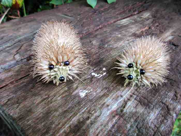 Learn how to make a Hedgehog out of a teasel seed head in our super easy tutorial.