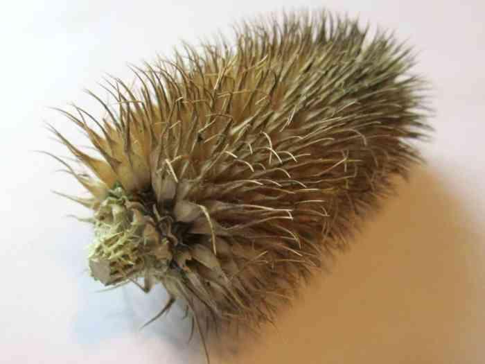 Making a teasel hedgehog - trim the stem