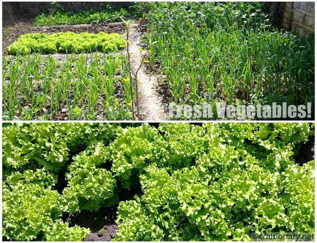 fresh-vegetables-from-the-garden-home-printable