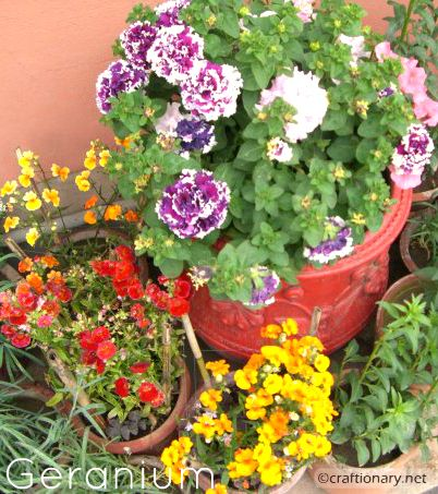 spring-flowers-geranium-free-printable-wallpaper