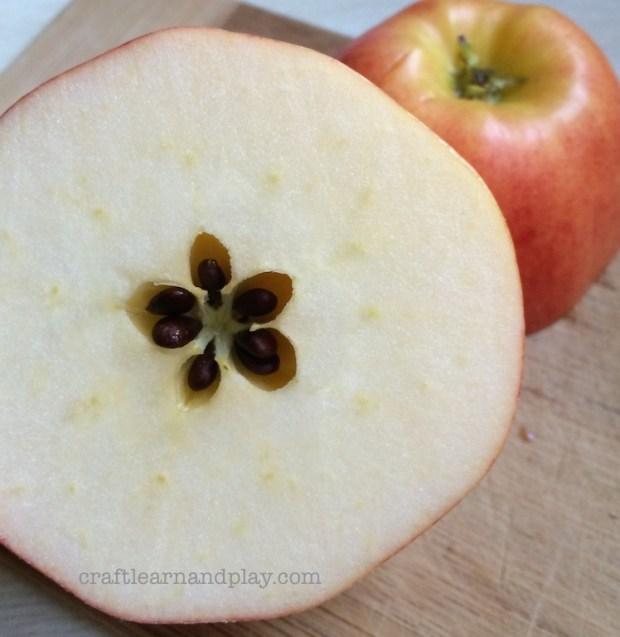 Cute Waldorf Story How Apple Got Its Star