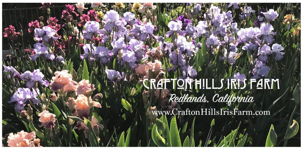 Irises with CHIF name and email 3