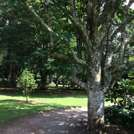 Pretty Trelissick Garden