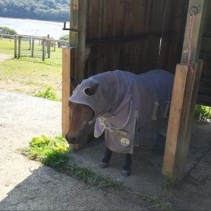 Seal Sanctuary - Pony