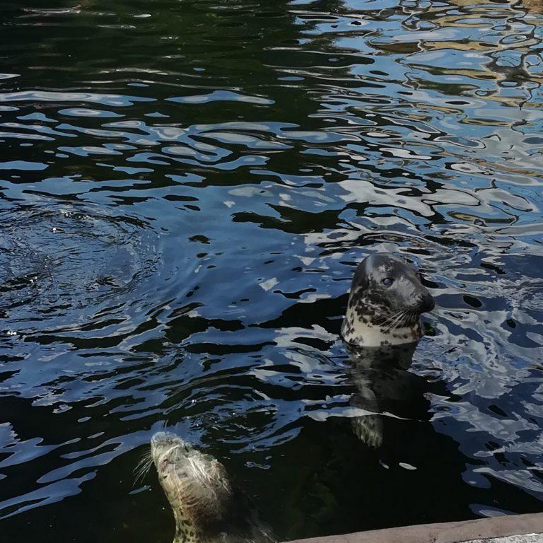Seal Sanctuary - Grey Seal