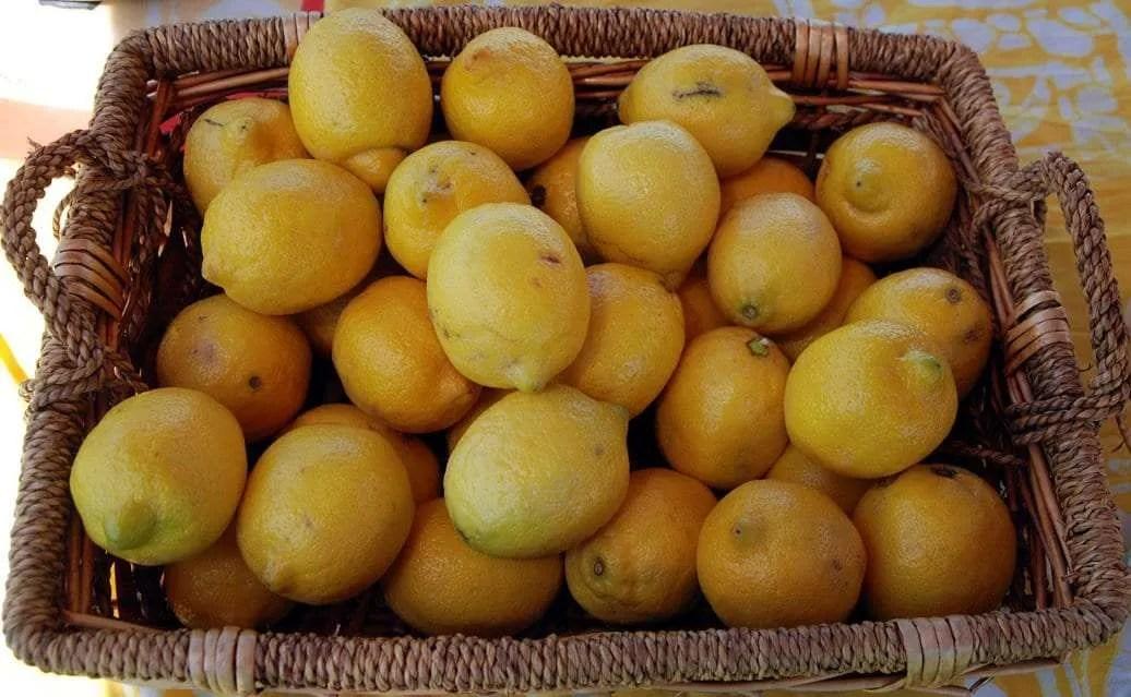 E&T's Fresh Lemonade lemons - Craftsbury Farmers Market