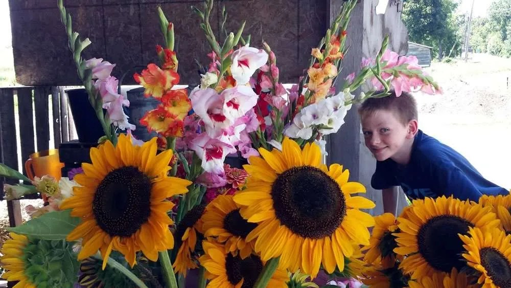 June's Flowers - sunflowers & young man - Craftsbury, VT