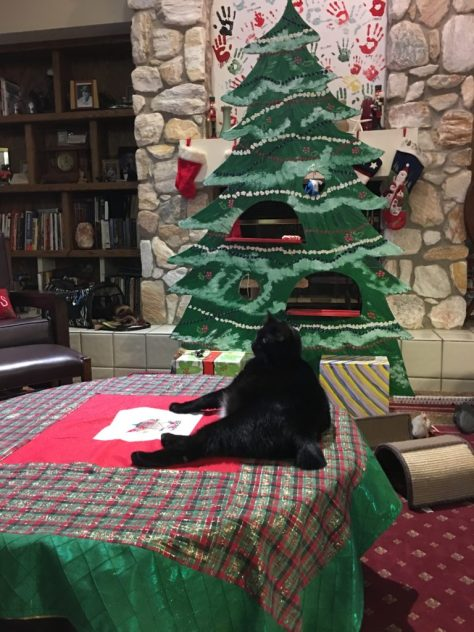 cat-proof tree jennyskip