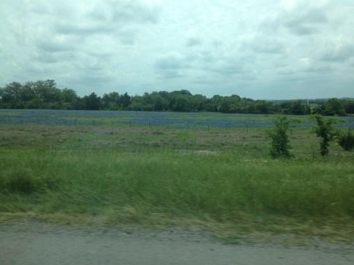 Not a lake, bluebonnets