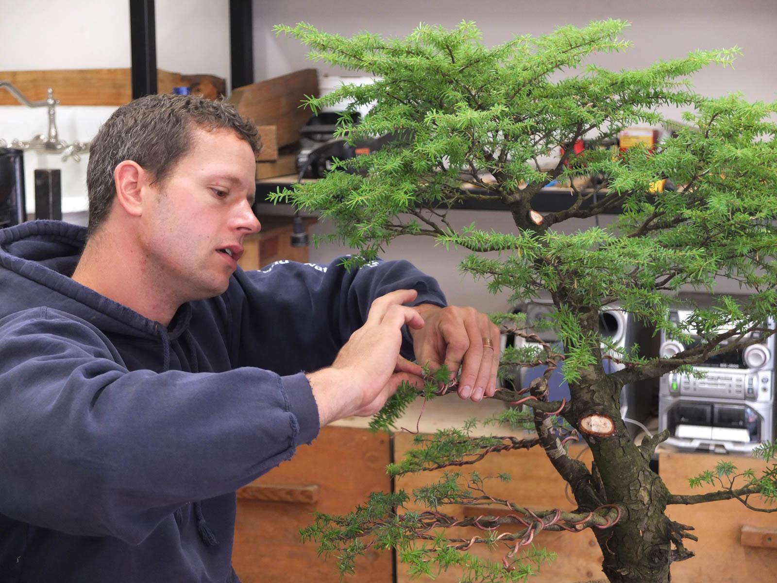 The Art Of Japanese Bonsai Trees Craftsmanship Magazine Wiring My