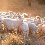 Eco-fashion's Animal Rights Delusion