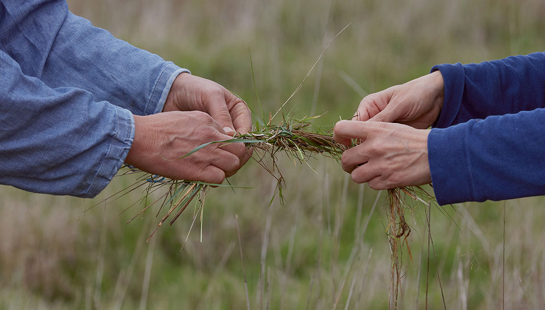 Two people's hands twist long grass together, holding at each end.