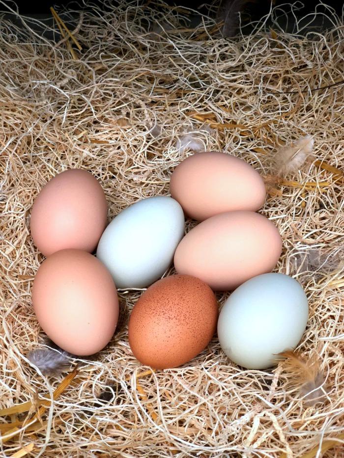 Eggs in nesting box