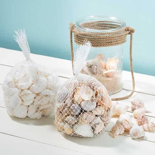 Bag of Shells India, bursapinosa & white