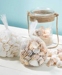 Bag of Shells India, bursapinosa & white