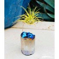 geode air plant holder