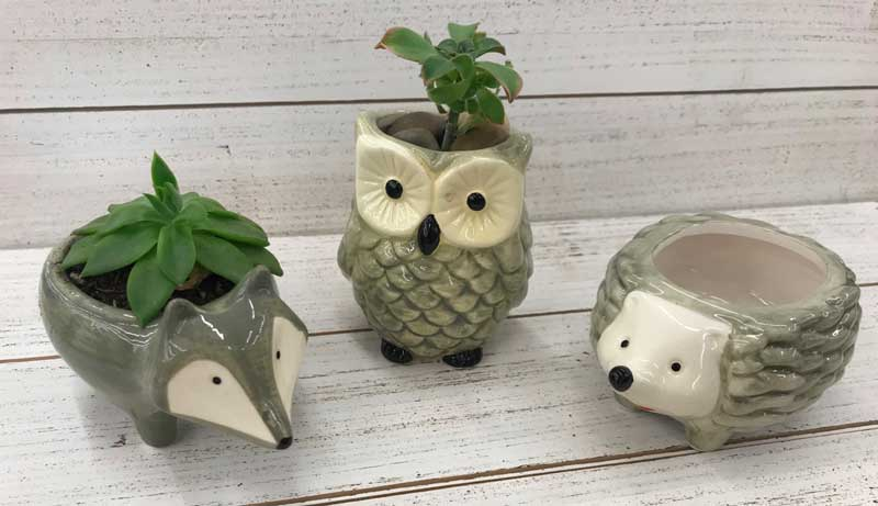Happy Hour: Woodland Critter Succulent Planter @ Vancouver Location | Vancouver | Washington | United States
