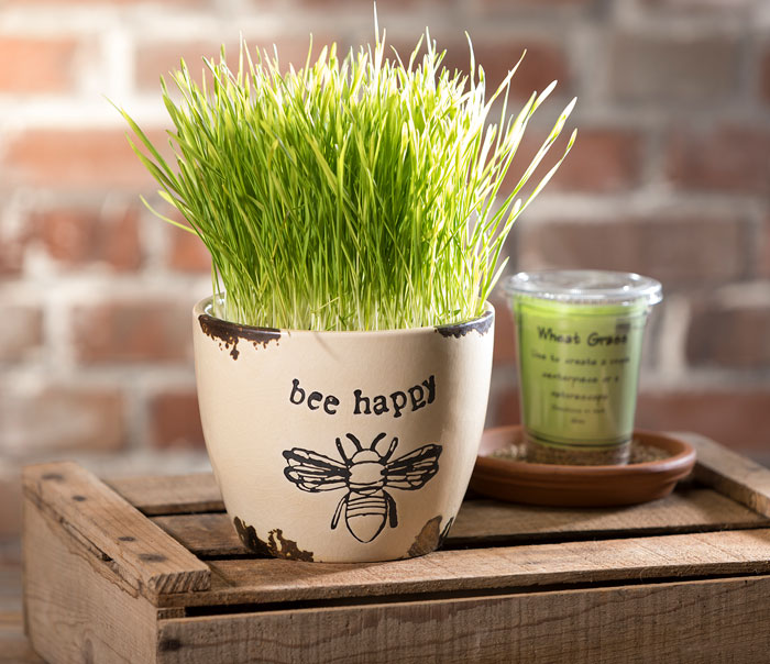 Wheatgrass in Bee Happy Pot from Craft Warehouse
