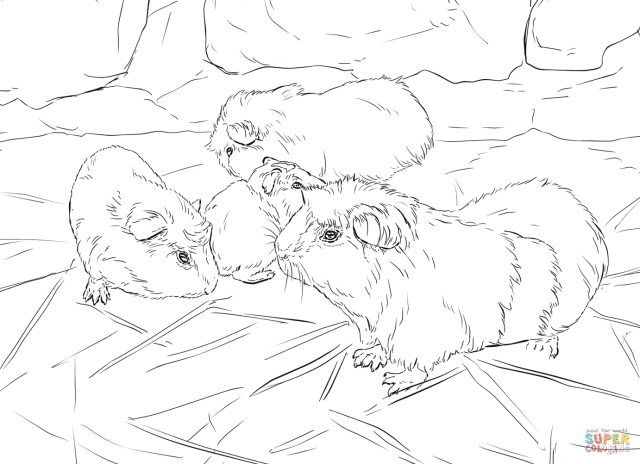 28 Adorable Guinea Pig Coloring Pages - For Kids & Adults