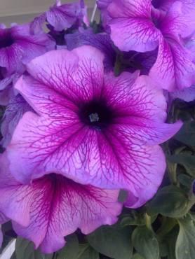 flower19-copy