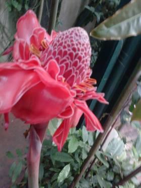 flower25-copy