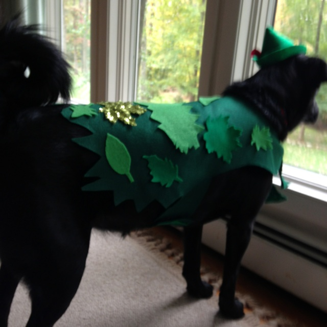 Second Star to the Right: Peter Pan Inspired Dog Costume (4/6)