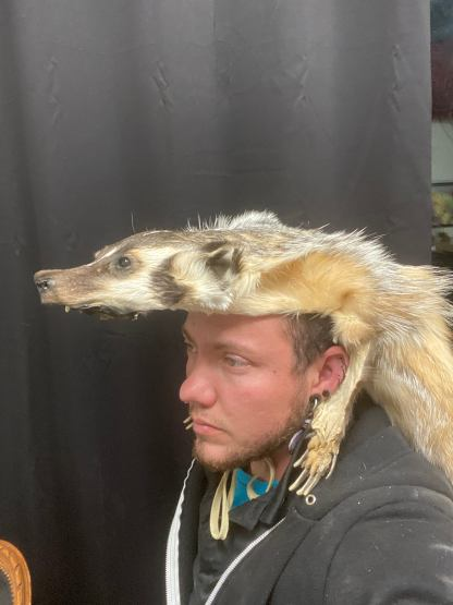 mounted Badger headdress with all claws and teeth