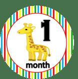 Giraffe - 1 month