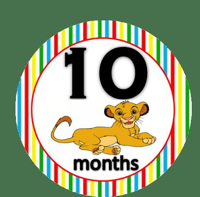 Lion - 10 months