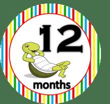 Tortoise - 12 months